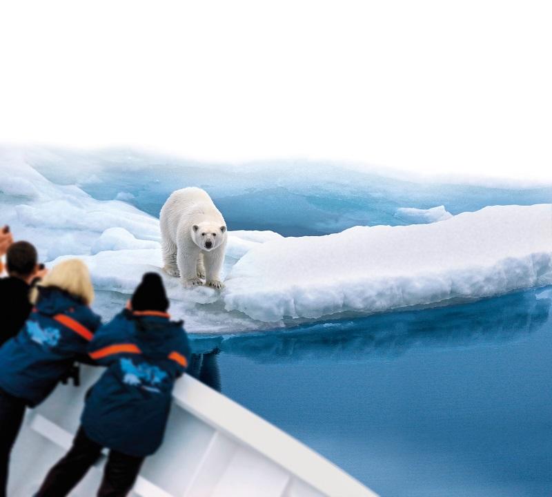 Orso polare abbattuto dopo aver assalito una guardia di Hapag-Lloyd Cruises che perlustrava il territorio per un'escursione a Spitsbergen